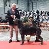 - Nemrod BOB à la Speciale de Race Deerhound du RALIE