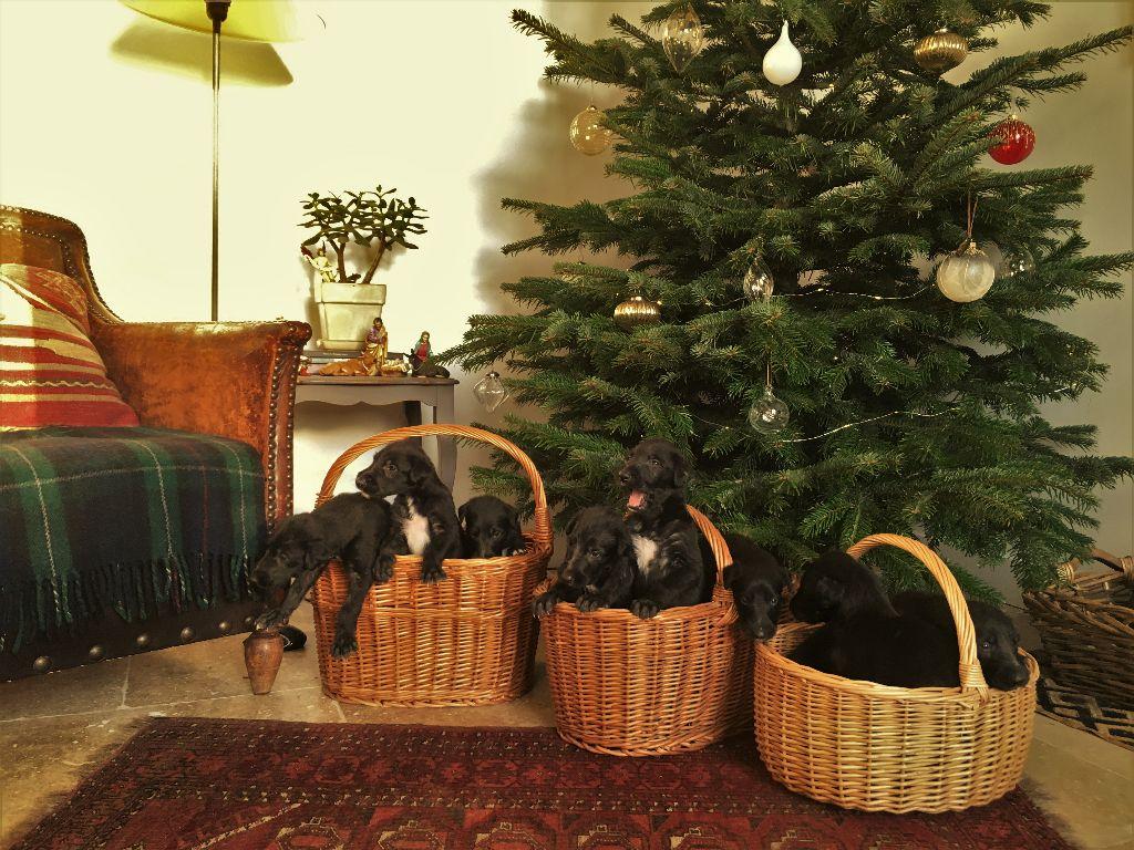 Antonius Vertragus - Joyeux Noël !