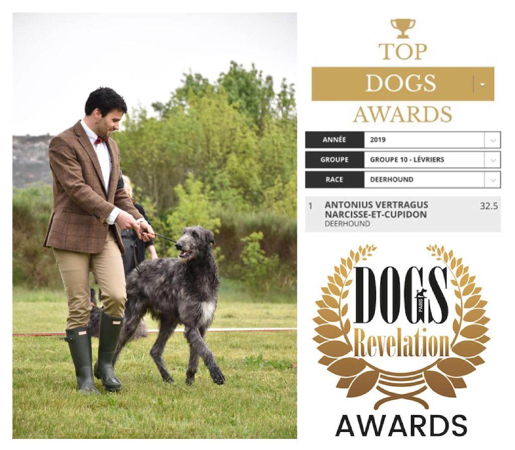 Antonius Vertragus - TOP DEERHOUND AWARDS 2019