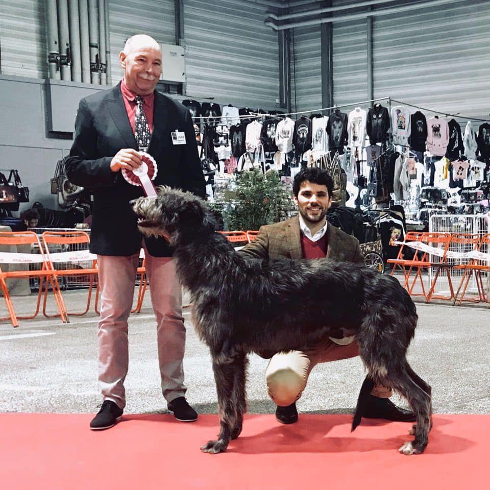 Antonius Vertragus - Nemrod BOB à la Speciale de Race Deerhound du RALIE