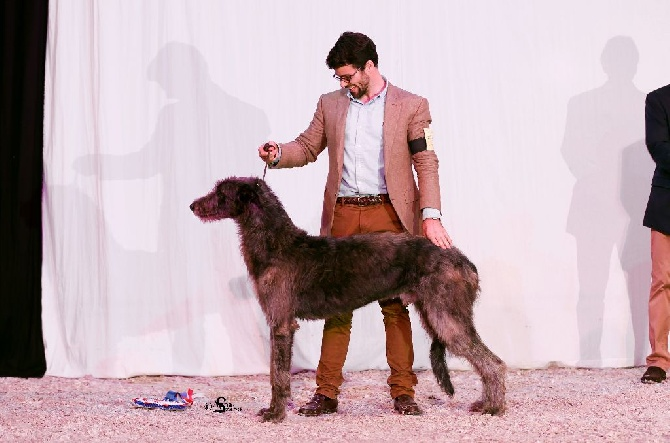 Antonius Vertragus - AV Lancret - BEST IN SHOW Jeune à Pompadour