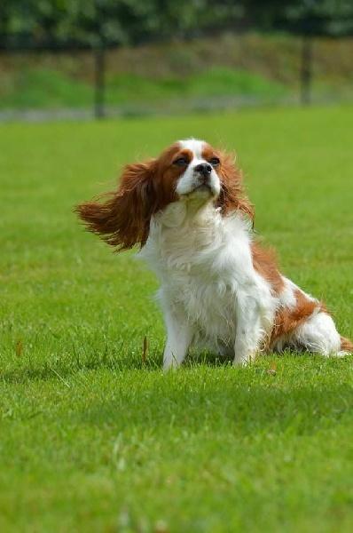 Accueil - Elevage Delphine Fleury - eleveur de chiens