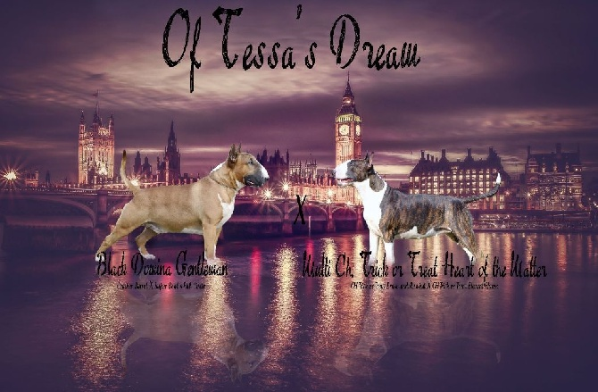 Of Tessa's Dream - Gestation confirmée!