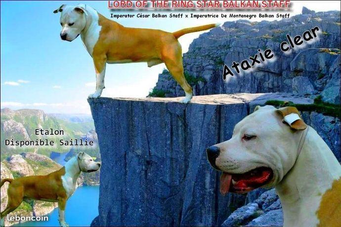 Publication : De L'Empreinte De Dog'star  Auteur :