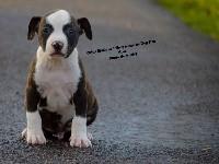 Orias Black de L'Empreinte de Dog'Star