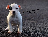 Oréa Idéa de L'Empreinte de Dog'Star
