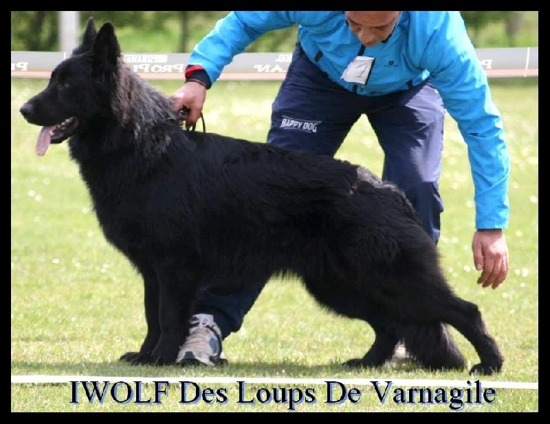 Publication : des loups de Varnagile  Auteur : Mme Chabert