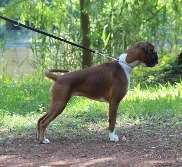 H 39 aloha des jardins de passiflore chien de race toutes races en tous departements france inscrit - Les jardins de passiflore ...