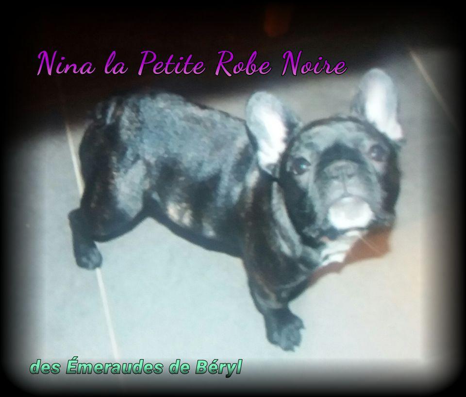 CH. Nina la petite robe noire Des Emeraudes De Béryl