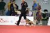 - Magnifiques résultats au World Dog Show 2015