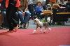- Little Dog of Dream Just An Angel championne jeune de Belgique