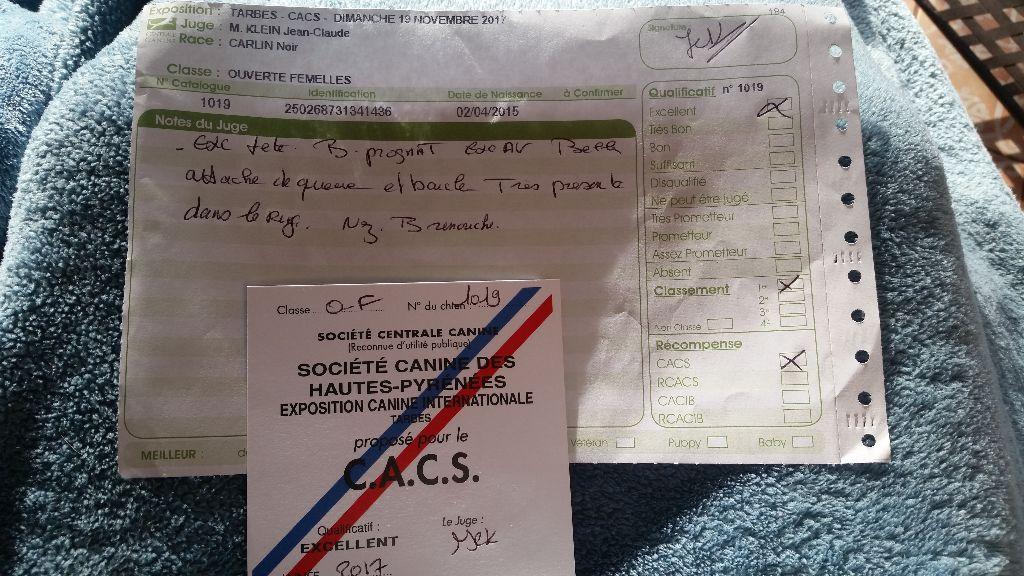 des guerriers Cathares - Céleste - CACS 1er EXCELLENT Tarbes