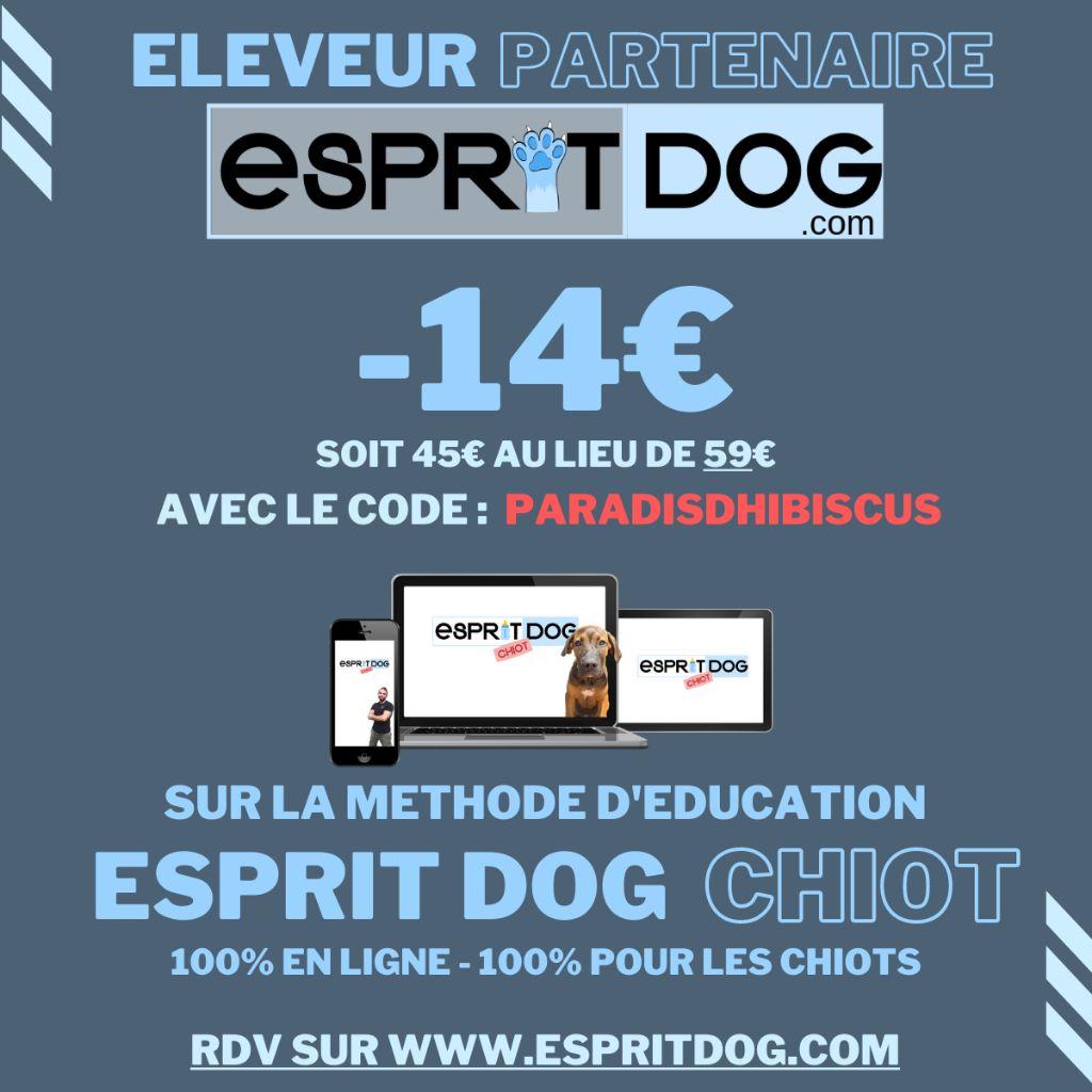Du Paradis D'Hibiscus - Education du chiot par Esprit Dog