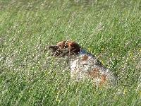 Haïda (trialer) De la plaine marat