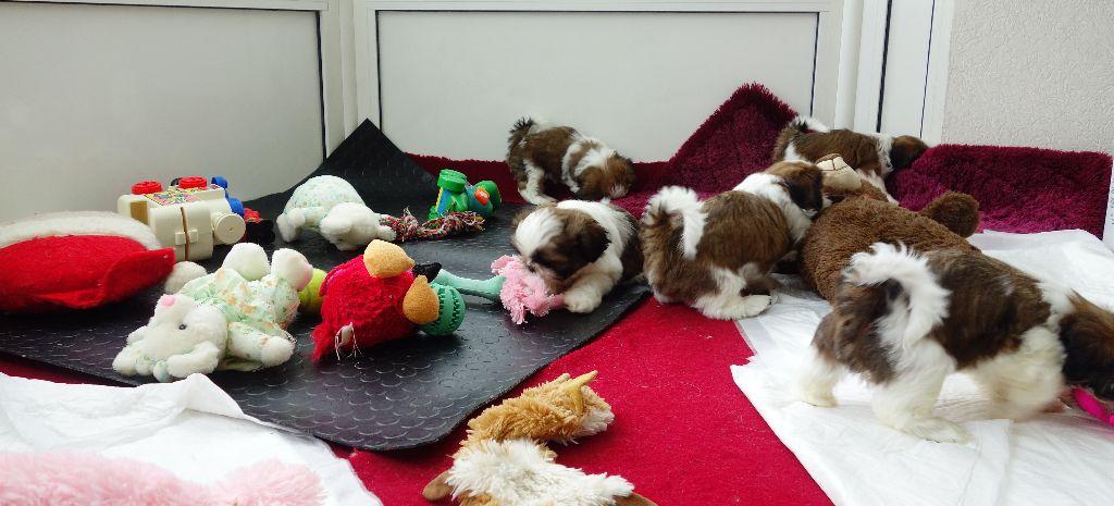 Des Portes De Shamballa - Visite chez le vétérinaire...