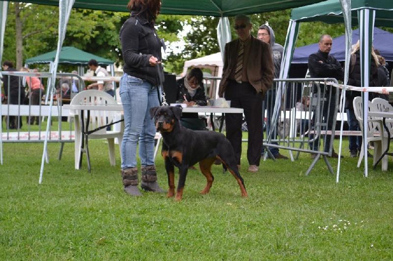 Hanka (Sans Affixe) chien de race toutes races en tous