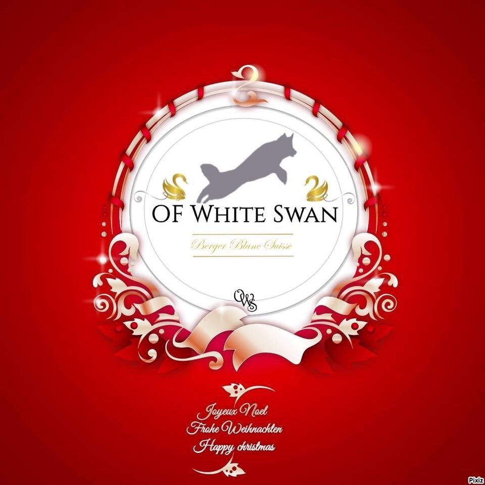 Elevage Of White Swan