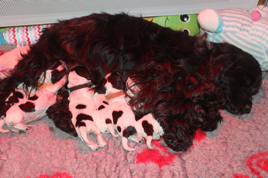 snpa rouen chiens a adopter page