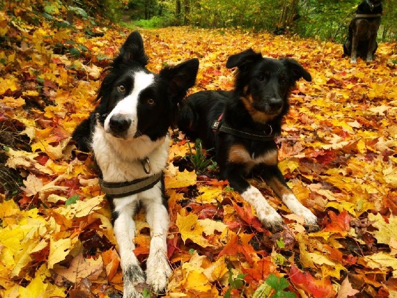 Dorka's Spirit - Habby et Lexie