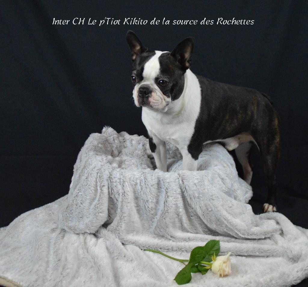 CH. Le p'tiot kikito De La Source Des Rochettes