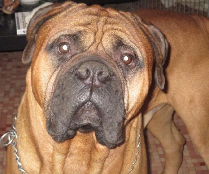 Doggy Dog - Wallas, bienvenu chez Doggy dog !