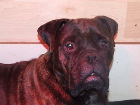 Doggy Dog Cristal