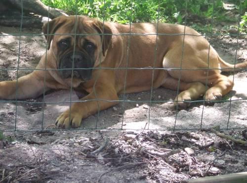 Doggy Dog éilistraée