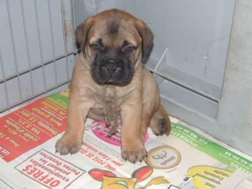 Doggy Dog Elphie