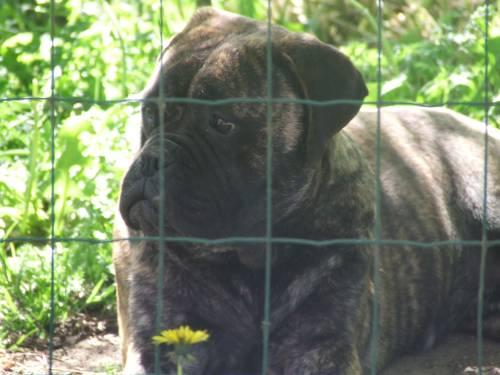 Doggy Dog Eowin