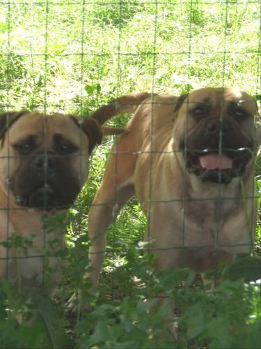 Doggy Dog Cheyenne