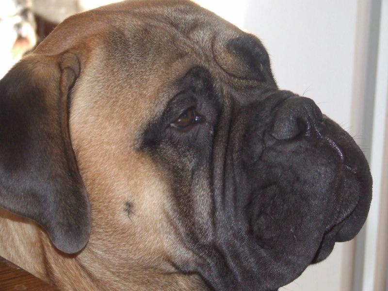 Publication : Doggy Dog  Auteur : jp