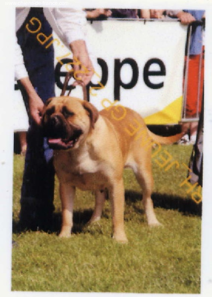 Doggy Dog Vertige d'amour