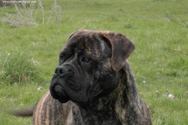 Doggy Dog Volcane (bringée)