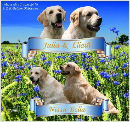 Du clos de nissa-bella - Chiot disponible  - Golden Retriever