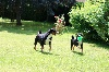 - Match de football Appenzellois improvisé dans le jardin.