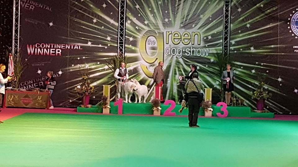 Wind of Blue Lakes - Exposition International Green Dog Show