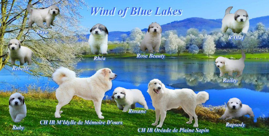 Wind of Blue Lakes - Chien de Montagne des Pyrenees - Portée née le 04/04/2018
