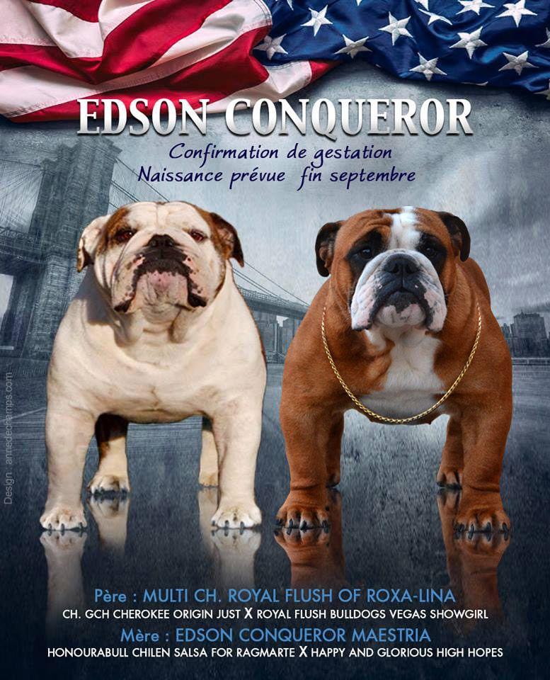 Edson Conqueror - une naissance fin septembre