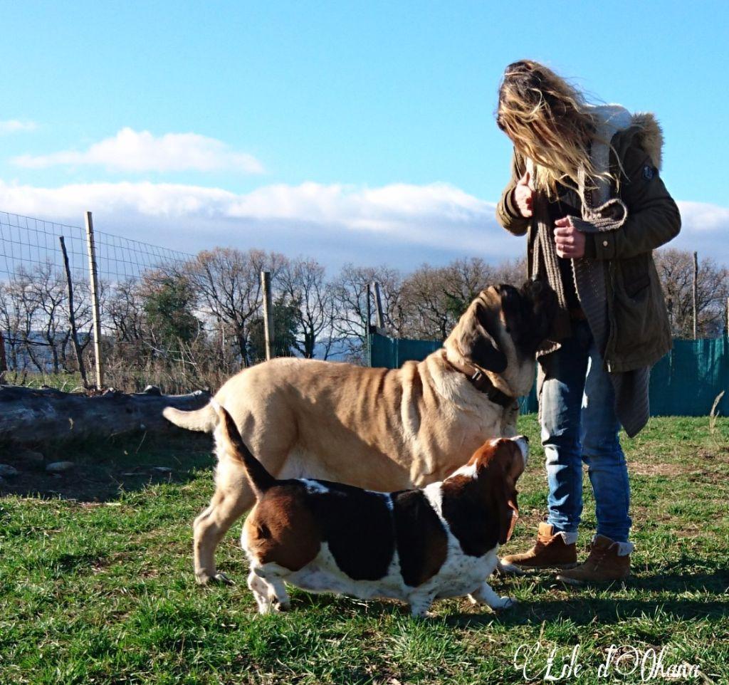 Accueil - Elevage De l'ile d'Ohana - eleveur de chiens