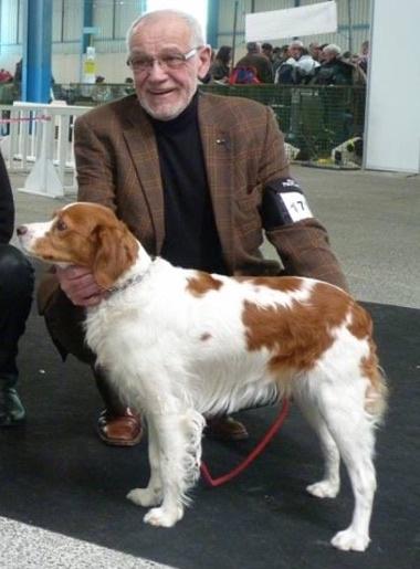 Accueil - Elevage De L'Helvie - eleveur de chiens Epagneul