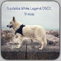 Nashoba white legend du glacier des loups