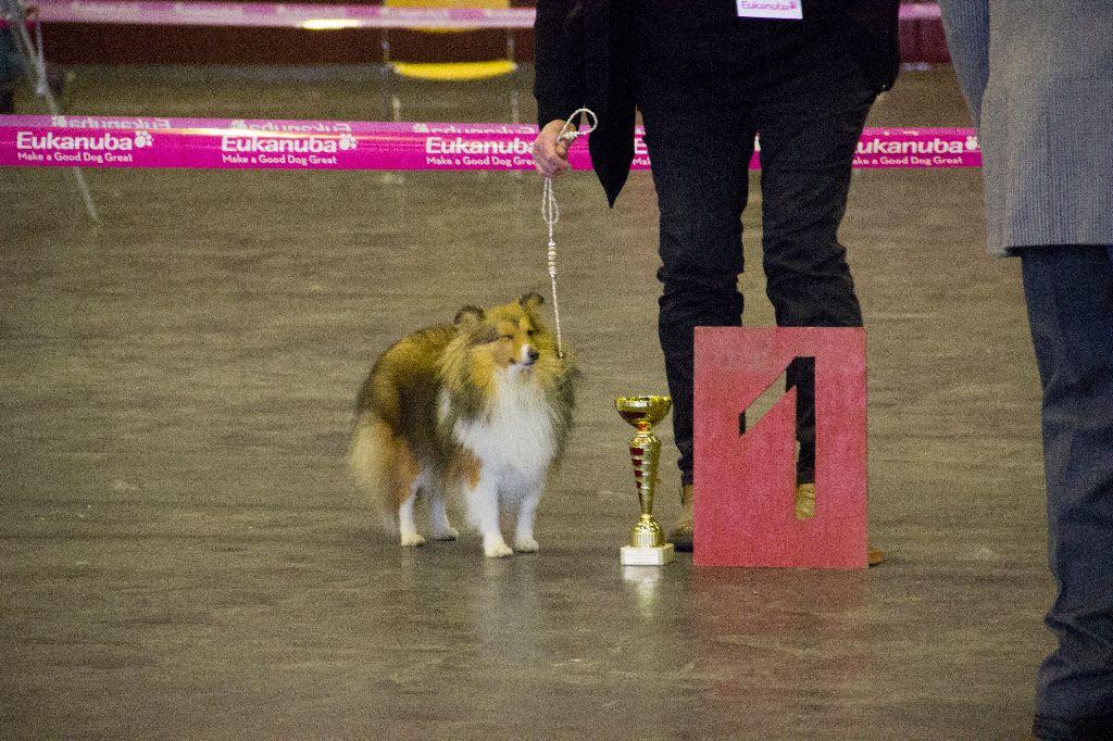 D'Ambre et d'ébène - Pearl of Happiness obtient le titre de champion jeune du Luxembourg