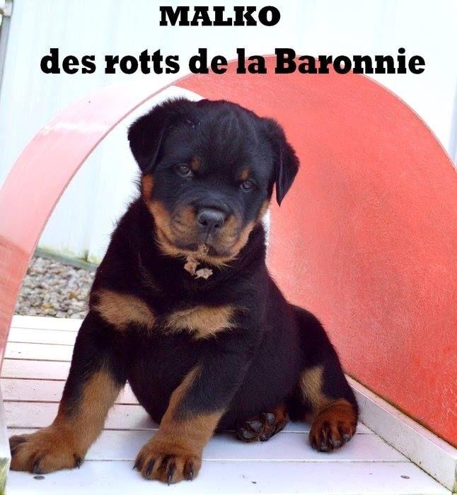 Publication : Du Domaine Du Gardien Des Nuits