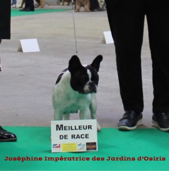 Des Perles Des Allenisses - Exposition Internationale de Dole ( Jura)