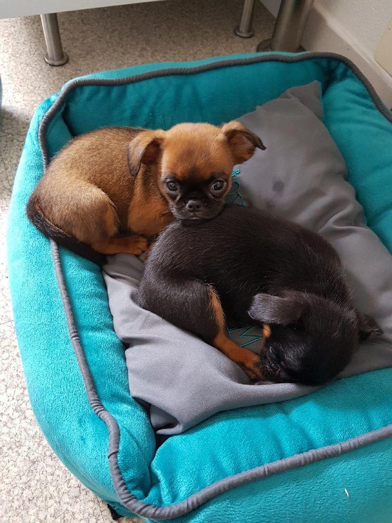 pension pour chien alsace