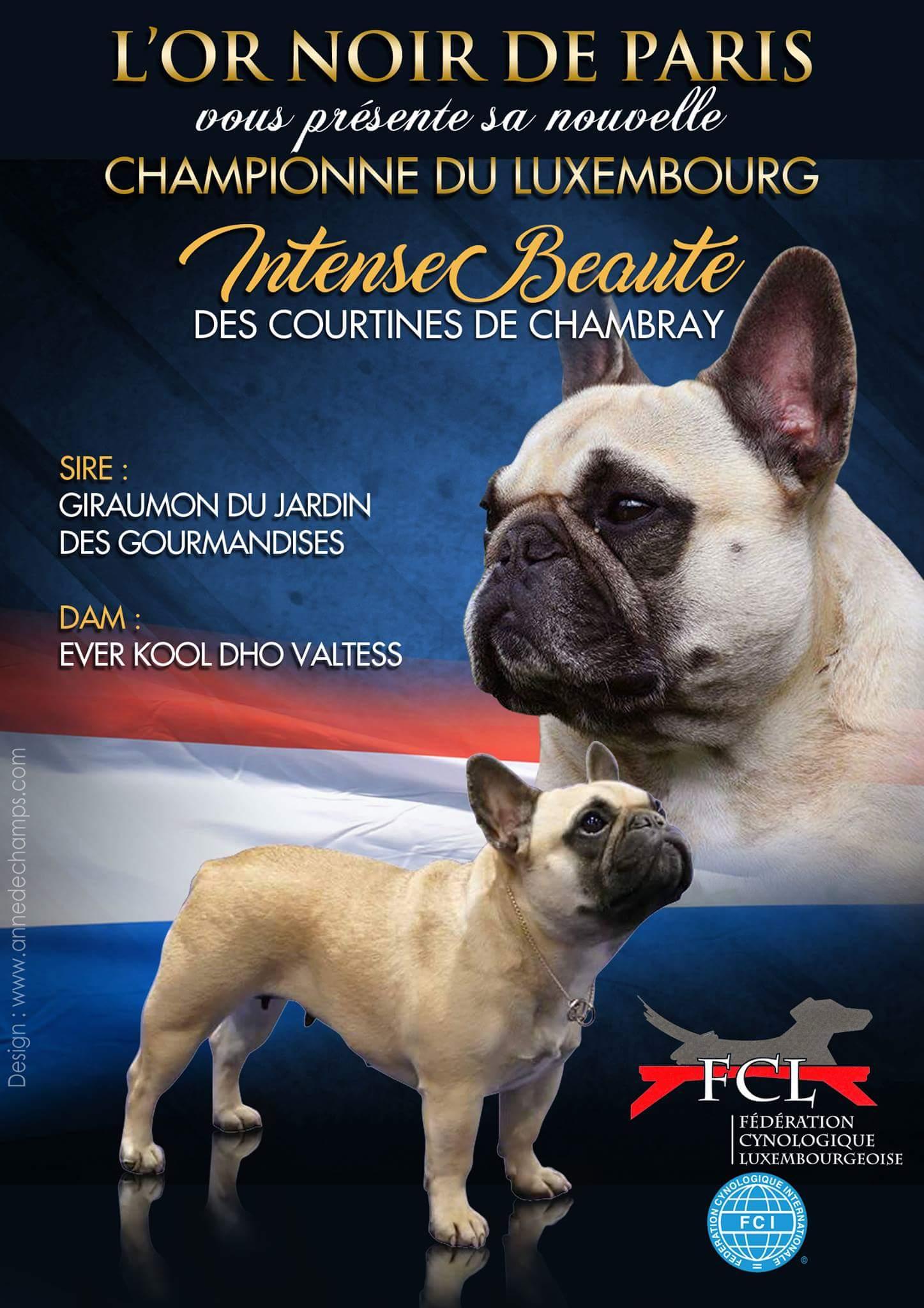 CH. Intense-beauté Des Courtines De Chambray