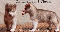 Of Northern Lights Spirit - Siberian Husky - Portée née le 06/04/2018