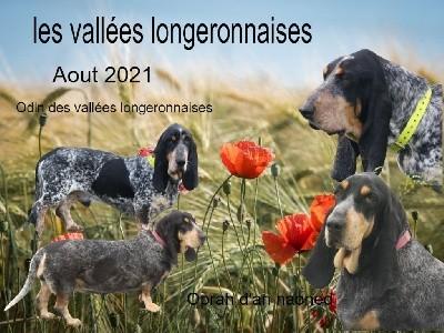 Basset bleu de Gascogne - des vallées longeronnaises