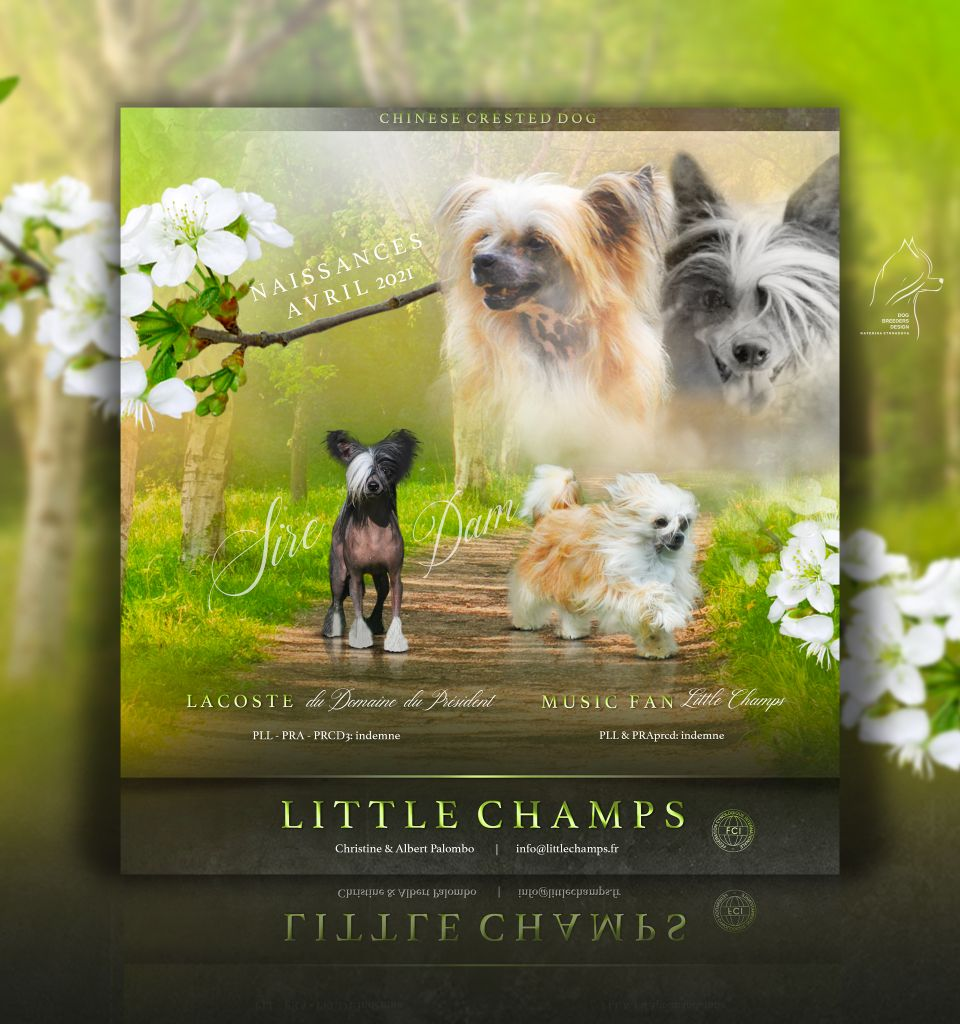 Little Champs - Des BB mi-avril pour Music