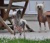 - Deux belles femelles sont arrivées à l'élevage